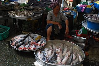 Basa fish - Vinh Long Market. Vietnam. By Alpha