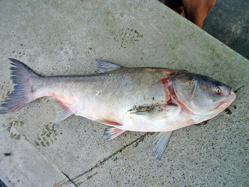 2 for Variedad de peces