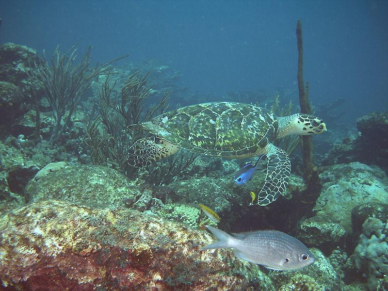 7. caribe.jpg