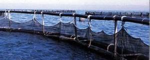 11 M€ de la Junta de Andalucía para la acuicultura marina