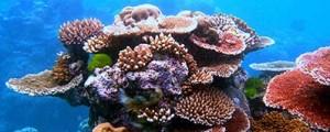 Rutas marítimas para proteger la Gran Barrera de Coral australiana