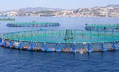 """Hoy es el """"Día de la acuicultura"""""""
