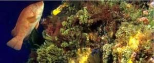 Declararán las montañas submarinas de Gorringe Área Marina Protegida