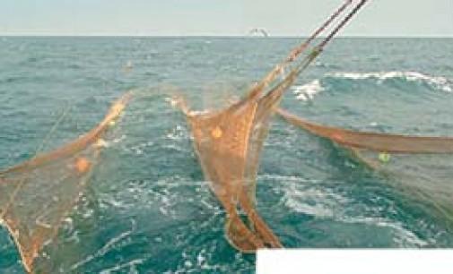 Desarrollo de un nuevo sistema de arrastre para la captura de camarón