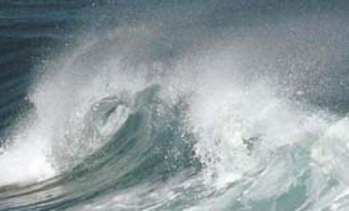 El océano Pacífico vuelve a tener índices de radiación normales