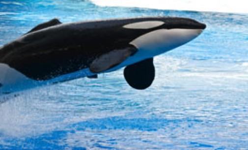 Nuevo proyecto AQUO para la disminución de la contaminación acústica submarina