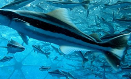 Los 10 principales productores acuícolas del mundo