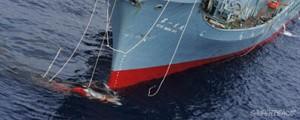 Japón continuará con la caza de ballenas