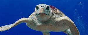 El día mundial de los océanos debería ser todos los días