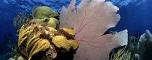 Un nuevo estudio señala la crisis en los océanos