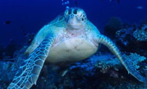 Grave descenso de las poblaciones marinas