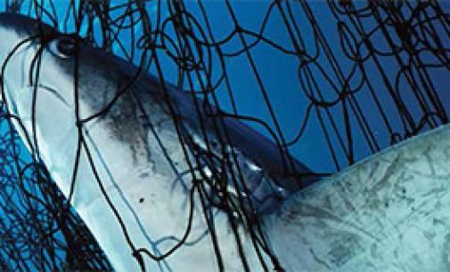 Oceana lucha por una pesca más limpia en EEUU