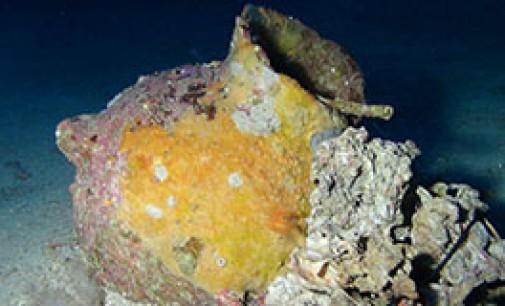 Hallan barco fenicio de 2.700 años de antigüedad