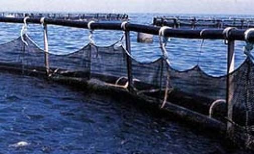 Próxima auditoría europea a la industria pesquera argentina