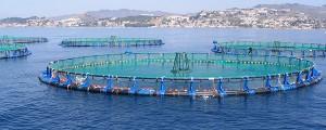 IMDEA Agua y la UMU trabajarán juntos por la sostenibilidad de la acuicultura en Europa