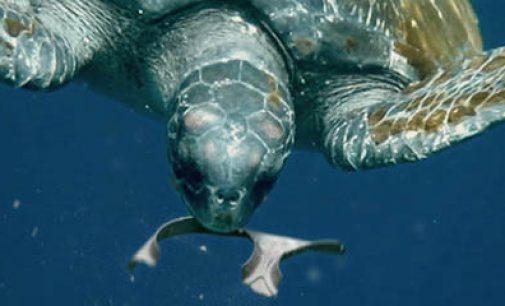 Anillas biodegradables para proteger los océanos