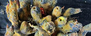 Gran arrecife descubierto en la desembocadura del Amazonas