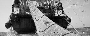La UE prohíbe la pesca de arrastre en aguas europeas a profundidades mayores de 800 m