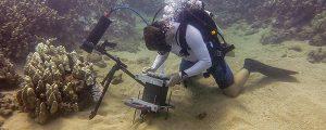 Desarrollan un microscopio para captar la vida submarina