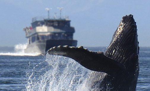 Efectos del ruido en la flora y fauna marina. ¿Sólo el sonido?