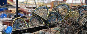 España presidirá el Comité de Acuicultura de la Comisión General de Pesca del Mediterráneo/FAO