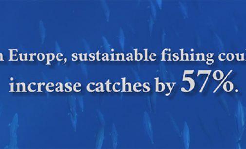 La pesca sostenible podría aumentar un 57% las capturas