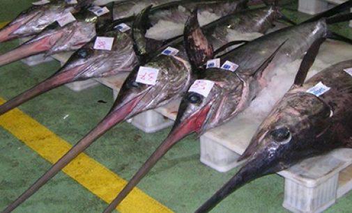 Plan de recuperación para el pez espada