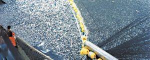 Más cuota de pescado, pero ¿es sostenible?