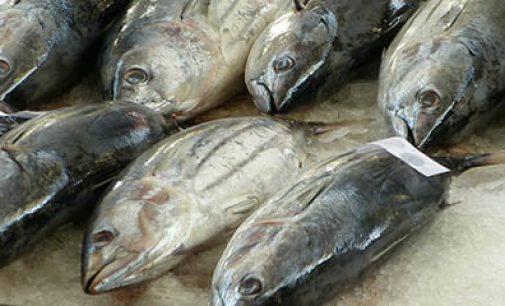 Balance positivo del acuerdo de TAC y cuotas de pesca del consejo para 2017