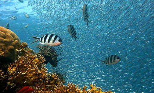 México está inmerso en la creación de una metabase de datos de investigación marina