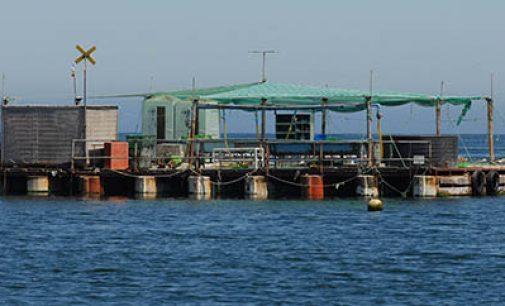 Chile invertirá en 70 nuevos proyectos de investigación pesquera y acuicultura