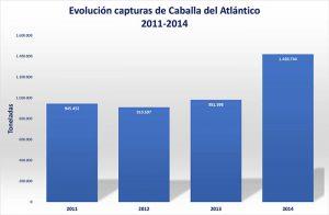 Caballa_del_Atlantico