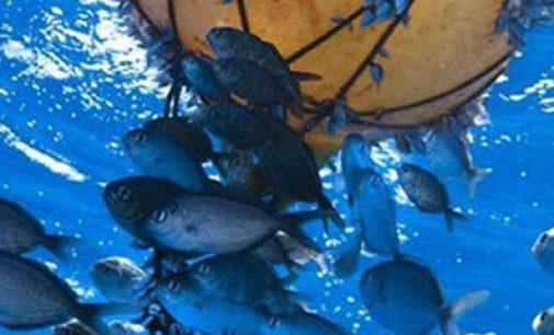 La flota atunera española retira desechos de las Seychelles