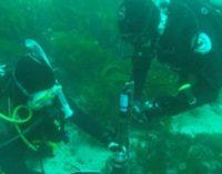 El ruido de los barcos afecta a la comunicación de las especies marinas