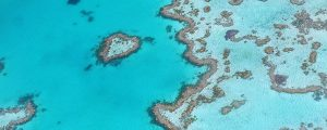 60 M$ para salvar la Gran Barrera de Coral