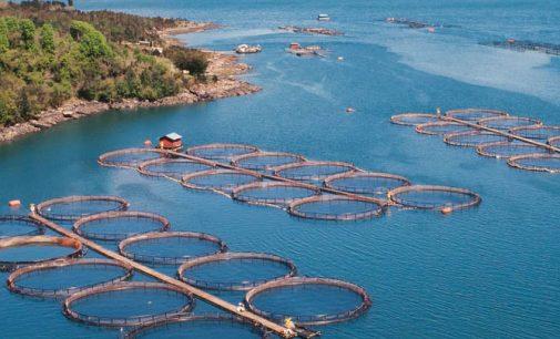 Las 10 especies de mayor producción mundial de acuicultura de 2015