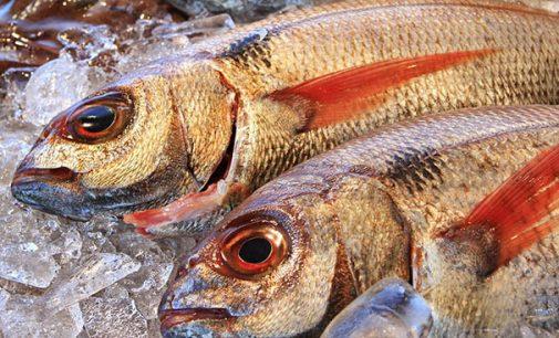 España registra en 2017 un descenso del 22% en la facturación de productos pesqueros