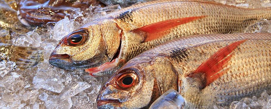 primera_venta_de_productos_pesqueros