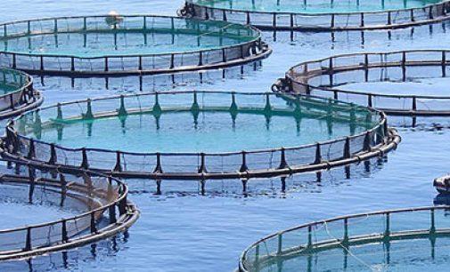 Acuicultura: Top 10 de países de mayor producción acuícola