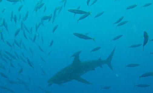 ¿Cuáles son los peces más pescados en el mundo?