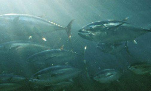 España defiende los derechos sociolaborales de la pesquería del atún tropical