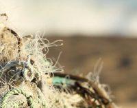 Reciclarán 100 t de redes de pesca en aguas de Chile