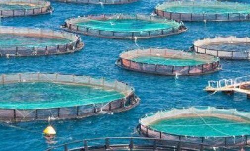La acuicultura europea se recupera plenamente de la recesión