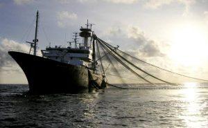 Una alianza que está salvando la biodiversidad de las aguas internacionales