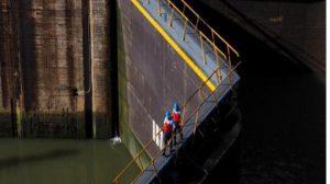 Canal de Panamá reitera normas marítimas para la protección de los cetáceos
