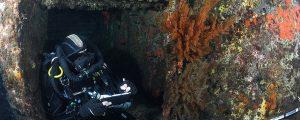 ¿Qué son los corales negros?