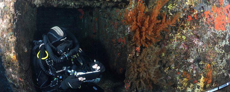 corales_negros