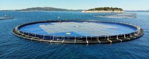 Ocean Sun y Fred Olsen Renewables ensayarán su planta solar flotante en el PLOCAN