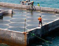 Finaliza el proyecto WINDS-STORE en el que ha participado Seaplace