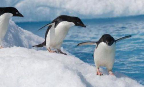 La UE lidera el esfuerzo internacional para establecer nuevas áreas marinas protegidas en la Antártida